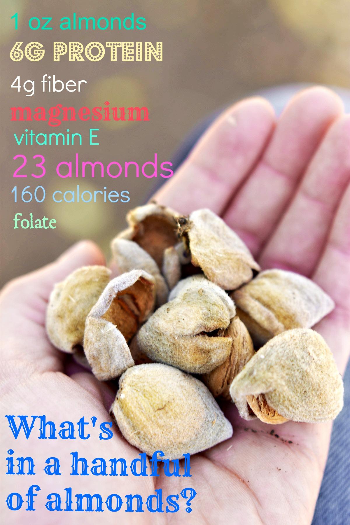 California Almond Orchard -7235