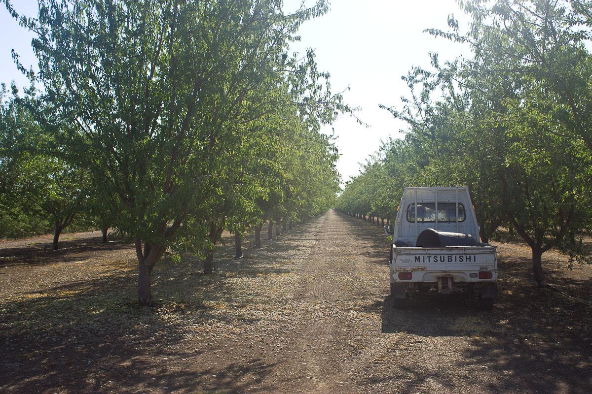 California Almond Orhard -7219