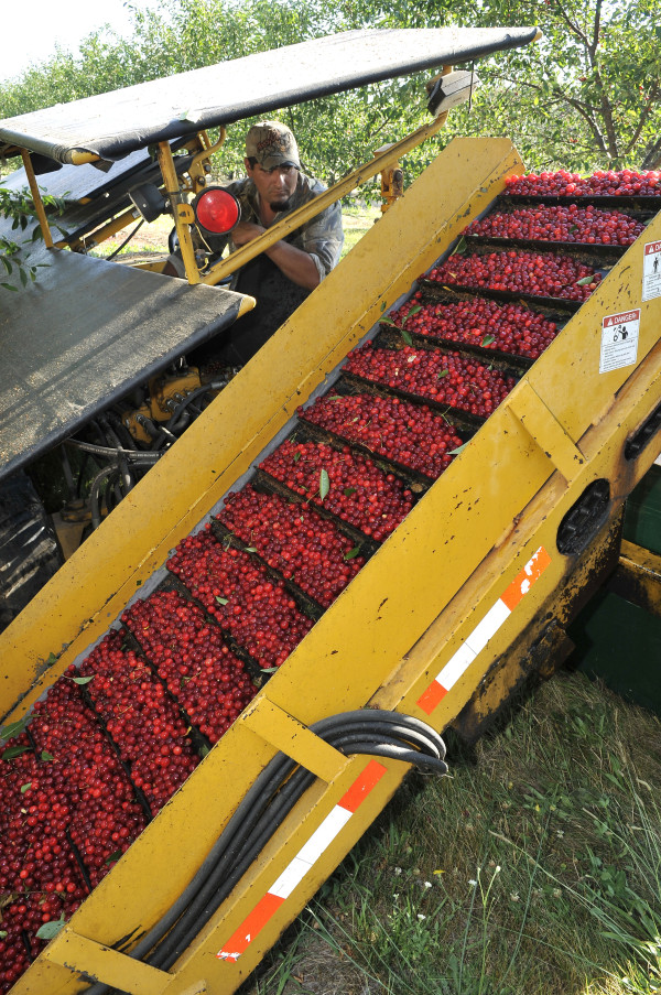 Immersion Tour at Cherry Bay Farms, Traverse City, Michigan